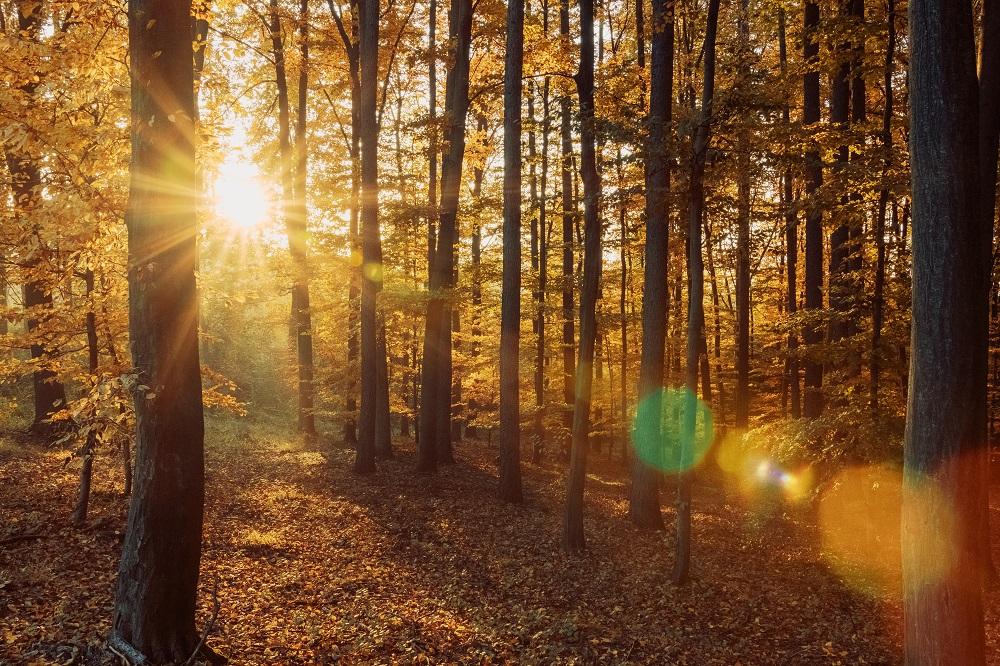 Sunlight photographs