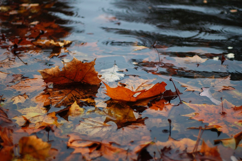 Photographing rain